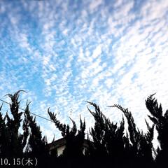 秋/フォロー大歓迎/リミとも部/風景/空/うろこ雲     2020.10.15(木)  庭…