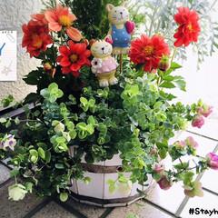 フォロー大歓迎/花のある暮らし/ガーデニング/KOMERI/ガーデン雑貨/花色彩ダリア フレスコ/...        2020.5.28(木) …