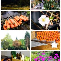 庭の花/柿の木/義父母手作り米/新米/お土産/義父母手作り野菜/...     2019.10.27(日)   …