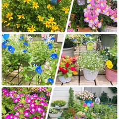 ガーデニング/花/庭/フォロー大歓迎/至福のひととき/風景/...     🌞良い天気なので庭で花のお世話🌼…
