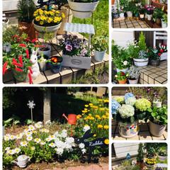 ガーデニング/春のフォト投稿キャンペーン/令和の一枚/フォロー大歓迎/GW/至福のひととき/...   連休最終日 昨日買ってきた紫陽花とワ…