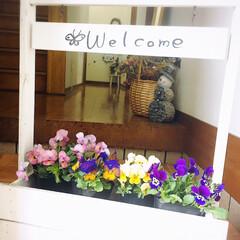 フォロー大歓迎/ガーデン雑貨/ガーデニング/花/KOMERI/ビオラ/...  外は雨☔️使ってなかった木製プランター…