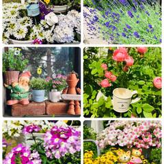 花/ガーデニング/フォロー大歓迎/至福のひととき/雑貨/風景/...     午後から🌞暑くなってきました🌼🌸…