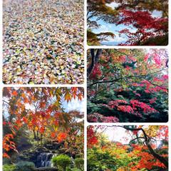 フォロー大歓迎/リミとも部/風景/松雲山荘/赤坂山公園/紅葉        2020.11.3(火) …
