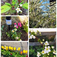 春のフォト投稿キャンペーン/フォロー大歓迎/春/風景           4/13(土)   …(1枚目)