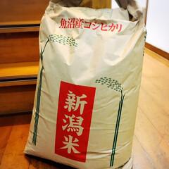 孫/けんちん汁/赤飯/新鮮野菜/新潟米魚沼産コシヒカリ/食事情/...        2019.1.26(日) …
