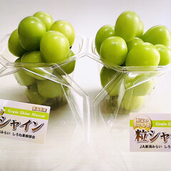 フォロー大歓迎/果物/リミとも部家事フォト/リミとも部/お土産/JA新潟みらい しろね果樹部会/...  🙎🏻♂️仕事先で買って🏡届けてくれた…