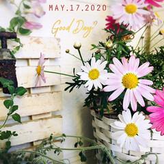 stayhome/おうち時間/おうちタイム/フォロー大歓迎/花のある暮らし/シャンブル/...        2020.5.17(日) …