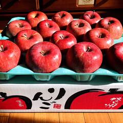 信州りんご/フォロー大歓迎/リミとも部/りんご  お義姉さんから📦真っ赤で美味しそうな信…