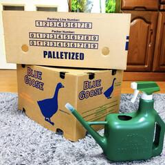 霧吹き付きジョウロ/ダンボール箱/フォロー大歓迎/雑貨/雑貨だいすき   スーパーで可愛いダンボール箱を2つ発…