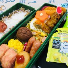 meijiもっちりプチホットケーキ.../主人弁当/3coins/なんじゃ村/花ちりめん/ぷるんと蒟蒻ソフトゼリー塩レモン/...             6/26(水) …(2枚目)