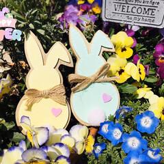 フォロー大歓迎/癒し/おうちタイム/ガーデン雑貨/ラベンダー/ネモフィラ/...        2020.4.12(日) …