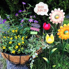 ガーデン雑貨/フォロー大歓迎/花のある暮らし/フラワー吊りカゴ用30㎝タイプ/バームマット吊りカゴ30㎝タイプ/ガーデンピック(ガーベラ)/...         2020.6.28(日)…