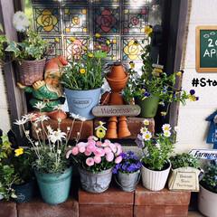 stayhome/おうちタイム/フォロー大歓迎/ガーデン雑貨/花/風景/...             2020.4.1…