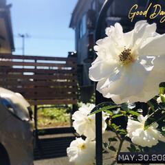 フォロー大歓迎/風景/薔薇/花/至福の時間/おうち時間/...        2020.5.30(土) …