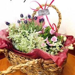 花のある暮らし/フォロー大歓迎/孫/感謝/ありがとう/寄せ植え/...        2020.5.10(日) …
