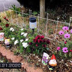 花/フォロー大歓迎/花壇/庭/ガーデンフェンス3ホワイト/ウォーターキーパー(小人)/...       2020.4.21(火) ①…