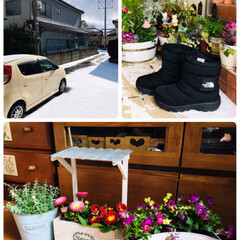 プリムラポリアン/デージー/ビオラ/花かんざし/アテーナ/KOMERI/...        2020.2.6(木)  …