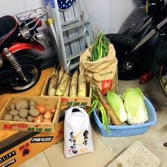 野菜/車庫/フォロー大歓迎   昨日、義父母が作った新鮮野菜あれこれ…