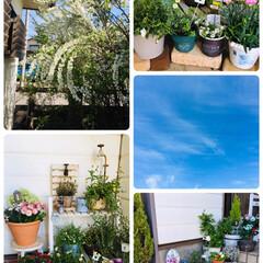 SaIut!/春のフォト投稿キャンペーン/フォロー大歓迎/春/風景/100均/...   空は青く良い天気🌞日焼けが気になるけ…(1枚目)