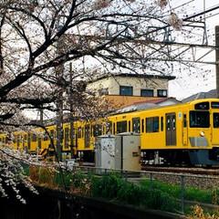 桜/フォロー大歓迎/春の一枚    🚃黄色電車と桜のコラボ🌸
