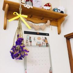 ホームセンター/KOMERI/千日紅ローズネオン/ドライフラワー/雨季ウキフォト投稿キャンペーン/フォロー大歓迎/...   KOMERIに花を買いに行きました🚗…