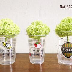 ドライ/フォロー大歓迎/空き容器/TULLY'S COFFEE/食べる牧場いちご/食べる牧場バナナ/...        2020.5.25(月) …