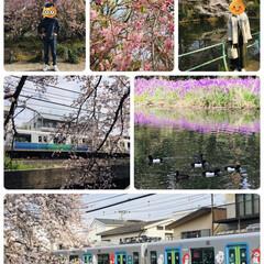 早朝散歩/春のフォト投稿キャンペーン/LIMIAおでかけ部/フォロー大歓迎/風景/おでかけワンショット         4/7(日) 早朝散歩 …