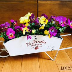 花/KOMERI/寄せ植え/ミニ観葉鉢カバー1輪車/ビオラ/暮らし/...  KOMERIで半額になってたブリキのミ…