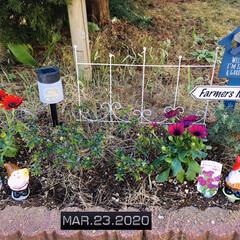 花/フォロー大歓迎/花壇/庭/ガーデンフェンス3ホワイト/ウォーターキーパー(小人)/...       2020.4.21(火) ①…(2枚目)