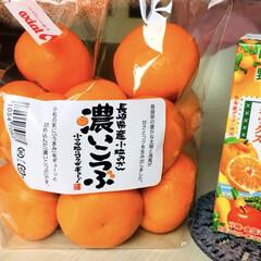 果物/みかん/フォロー大歓迎 長崎県産小粒みかん濃いこつぶ🍊 小さいサ…