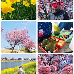 フォロー大歓迎/風景/水仙/菜の花/桜/お花見/...        2020.4.4(土)  …
