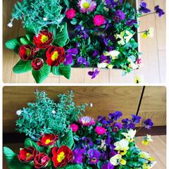 花かんざし/デージー/プリムラポリアン/ビオラ/花/KOMERI/...        KOMERI  雪が全く無…