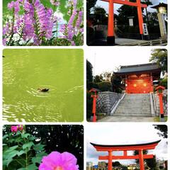 自転車/神社/公園/風景/朱色/おでかけ/...              2019.9.…