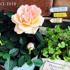 フォロー大歓迎/ガーデン雑貨/玄関前/リミとも部/暮らし/花のある暮らし/...       2020.12.13(日) …