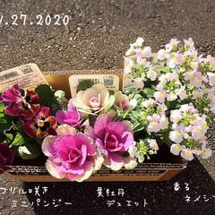 フォロー大歓迎/花のある暮らし/リミとも部/暮らし/KOMERI/香るネメシア/...     買い物ついでに隣のKOMERIへ…(1枚目)