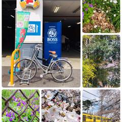 ドン・キホーテ/桜/LIMIAおでかけ部/風景   娘の🚲でドンキまで途中の公園の桜や花…