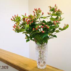 フォロー大歓迎/住まい/切り花/JA/花のある暮らし/ヒペリカム/...  JAでヒペリカム¥150早めに行くと切…