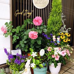花/フォロー大歓迎/花のある暮らし/ニチニチソウ/アゲラタム/アンゲロニア/...         2020.8.1(土) …