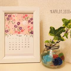 トイレ/フォロー大歓迎/アイビー/植物/なんじゃ村/calendar2020/...        2020.4.1(水)  …