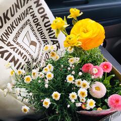 フォロー大歓迎/花色彩ラナンキュラス マシュ/花かんざし/恋するデイジー/花/ホームセンター/...   スーパーに行ってガラ〜ンとした棚見て…