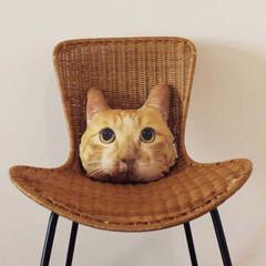 猫/クッション/インテリア雑貨/猫雑貨/うちの子クッション/ハンドメイド/... 今はちょっとお休みしている、オーダーメイ…