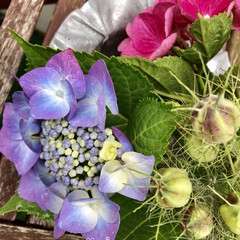 ニゲラ/紫陽花/季節インテリア/梅雨/暮らし/梅雨対策/... 今日は6月16日❁⃘*.゚  6月の6の…