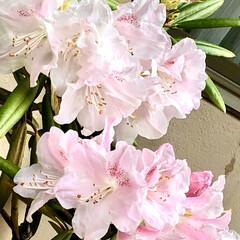 春/ダイソー/セリア/ハンドメイド/暮らし おはようございます٩(*´꒳`*)۶  …