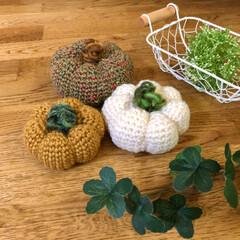 かぼちゃ/編みぐるみ/ハロウィン/ダイソー/セリア/雑貨/... ᙏ̤̫🎃۹(ÒہÓ)۶カボチヤ🎃🎃収穫…