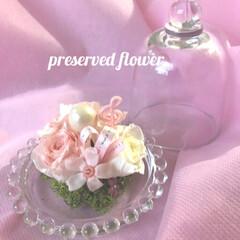 ピンク色/ガラスケース/三又の花/ミニ薔薇/プリザーブドフラワー/雨季ウキフォト投稿キャンペーン/... ピンク色は赤に光が当たった色で、優しい印…