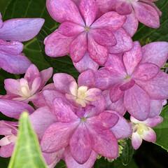 季節の花/休日/暮らし/梅雨/梅雨対策/雨対策/... 今日はお休みで、久しぶりにのんびりしまし…(7枚目)