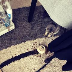 マンチカン/空/ソラ/そら/ペット/猫 ごめんね、そらくん🙏 悲しそうなそらくん…