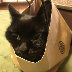 紙袋/黒猫