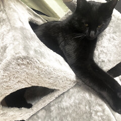 キャットタワー/猫/黒猫/猫のいる生活/ペット/フォロー大歓迎/... エアコン当たるところにキャットタワーおい…